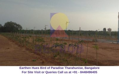 Earthen Hues Bird of Paradise Tharahunise, Bangalore Actual View of Project site